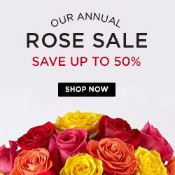 ftd rose sale